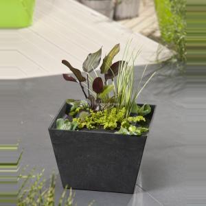 Mini vijver zwart met planteneiland