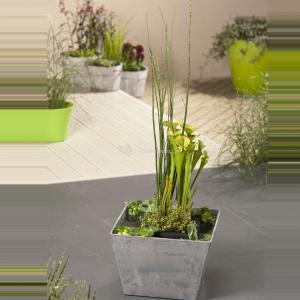 Mini vijver grijs met planteneiland