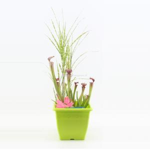 Mini vijver vierkant kunststof limegroen