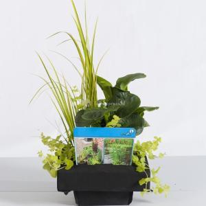 Mix waterplanten op drijvend planteneiland