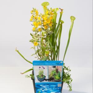 Mix waterplanten in vijvermand