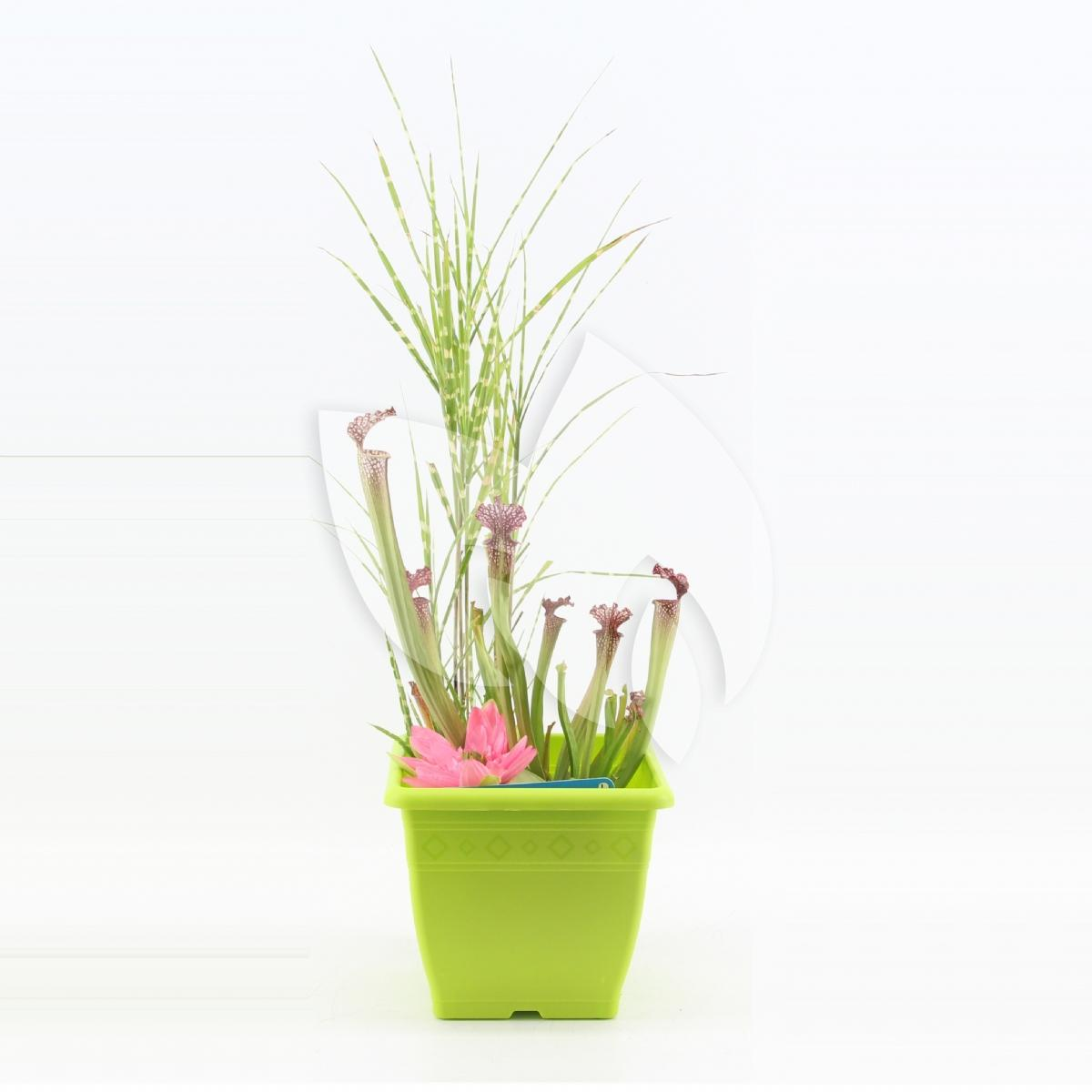 Moerings waterplanten mini vijver vierkant kunststof for Kunststof vijvers