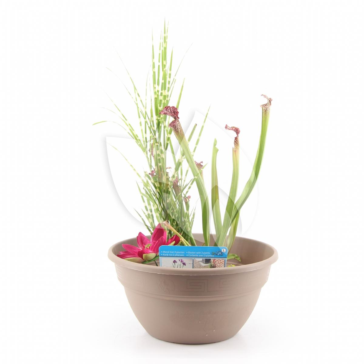 Moerings waterplanten mini vijver kunststof taupe for Kunststof vijvers