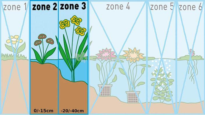 "Bonte mattenbies (Scirpus tabernaemontani ""Zebrinus"") moerasplant"